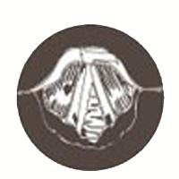 laringe_logo